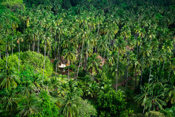 Asian hut cottage in lush green jungle, panoramic view from the top, thailand