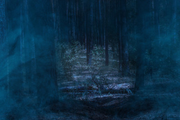 dark and mysterious night forest with tall pines and covered with mystical blue mist