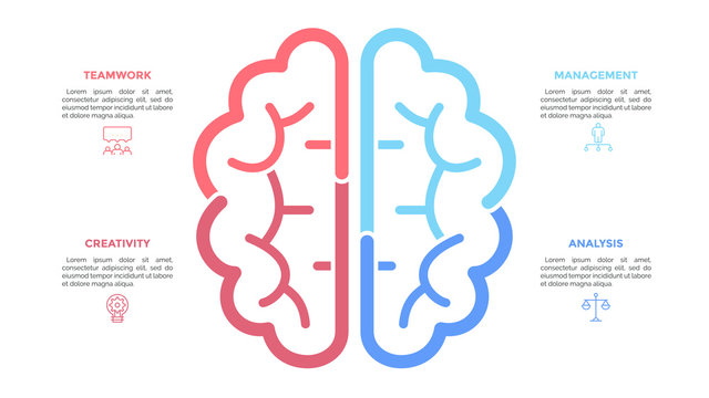 Silhouette of human brain drawn with colorful lines, linear icons and text boxes. Concept of brainstorming, modern thinking and neuroscience. Creative infographic design layout. Vector illustration.