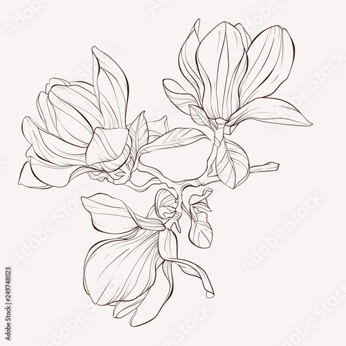 Sketch Floral Botany Collection Magnolia Flower Drawings Black And