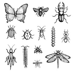 Set of hand-drawn insects butterfly, bee, stag beetle, Colorado potato beetle, ladybug, beetle, caterpillar, ant, grasshopper, centipede, fly, dragonfly.