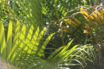 Door stickers Palm tree palmeira