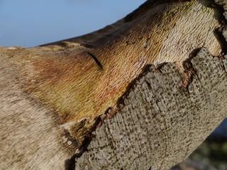 Baumrinde vom Baumstamm abgebröckelt