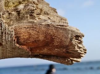 abgebrochener Baumast am Strand