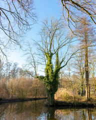 Kurios aussehender Baum an einer Flussgabelung. Standort: Deutschland, Nordrhein-Westfalen, Hoxfeld
