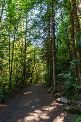 Hiking Path trough green Forest of in summer time.