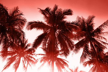 Tropical background. Toning