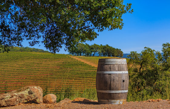 Rows of grape vines on rolling hills with a wine barrel in the foreground at a vineyard in the spring in Sonoma County, California, USA