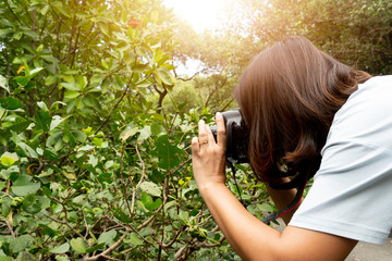 Side view of women photographers lift the digital camera to take pictures of trees.