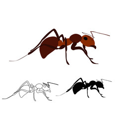 brown ant, silhouette and sketch
