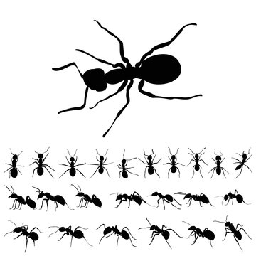 set of ants silhouettes