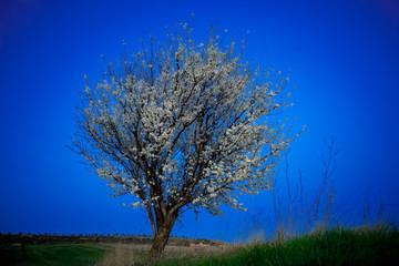 Almendros floración música relajante almendras atardecer