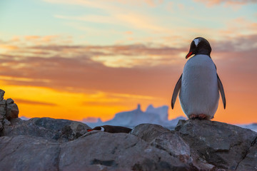 Papiers peints Antarctique penguin in antarctica