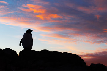 silhouette of penguin on top of mountain at sunset