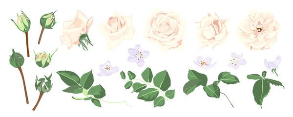Vector Flowers Bouquet, Wedding Floral Set.
