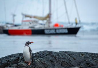 sailing ship and penguin in antarctica