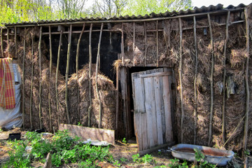 Shed in the village in the summer in the Central European part of Russia. Leaves of green grass and tree lit by sunlight.