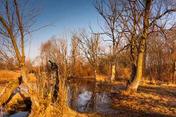 Fototapeta Rozlewisko rzeki obraz