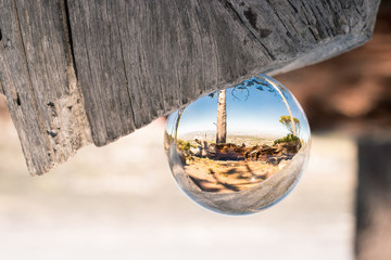 Dead tree in glass/crystal ball