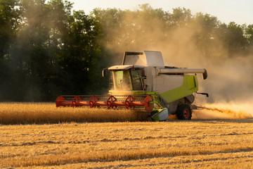 Etiqueta Engomada - Combine harvester harvests wheat at sunset.
