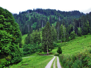 Trees and mixed forests of the slopes of Churfirsten mountain range in the Toggenburg region - Canton of St. Gallen, Switzerland