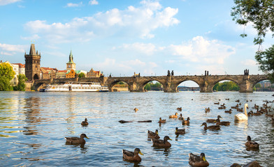 Fototapete - Birds on river Vltava