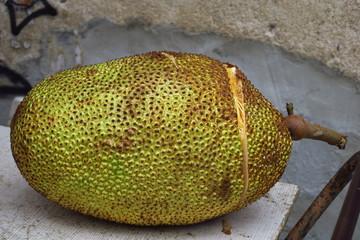 Fruit jack jacquier