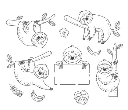 Set of outline sloth sitting on a branch. Coloring Pages