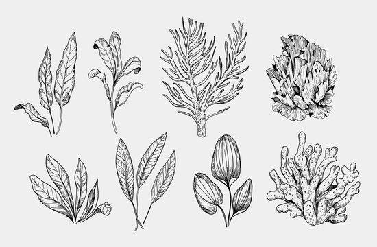 Set of aquarium plants. Hand drawn illustration converted to vector