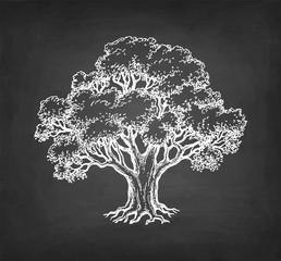 Chalk sketch of oak tree.