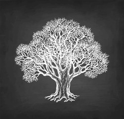 Chalk sketch of oak without leaves.