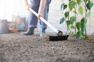 man working in the vegetable garden, hoe the ground near green plants, close up