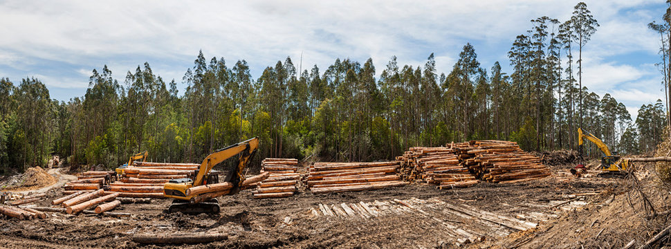 Panoramic view of forestry equipment moving timber at a coupe in Victoria Australia