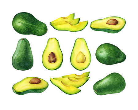 Set of fresh whole and sliced avocado fruit (also called an avocado pear,  butter fruit or alligator pear).  Hand drawn botanical watercolor painting illustration isolated on white background.