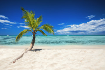 Tropical beach with palm tree. Holiday and vacation concept.