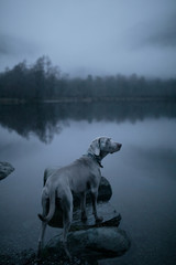 Dog on the lake