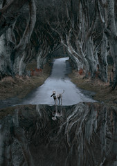 Reflection of a dog in a moody road