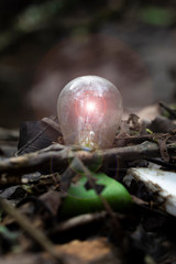 Discarded Car Light Bulb in Forest Woodland setting - Metaphor for renewable energy / fossil fuel / green ideas