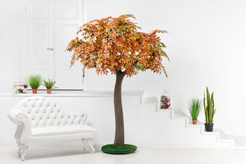 Autumn artficial ficus tree with pot plants as decoration of interior of room.