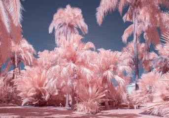 Palm Trees in Pastel Infrared Color
