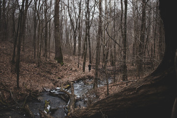Forest stream surrounded by woods in winter