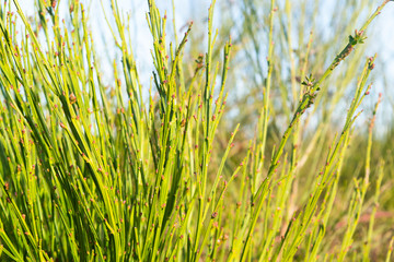 Natural Green Grass Background Image