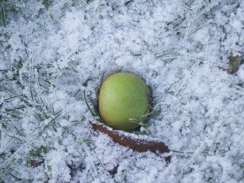 Green Apple in Snow