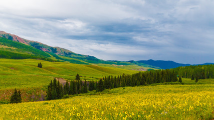 Vast Colorado mountain vista of wildflower meadows