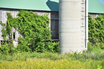 Silo by the Barn with Vines