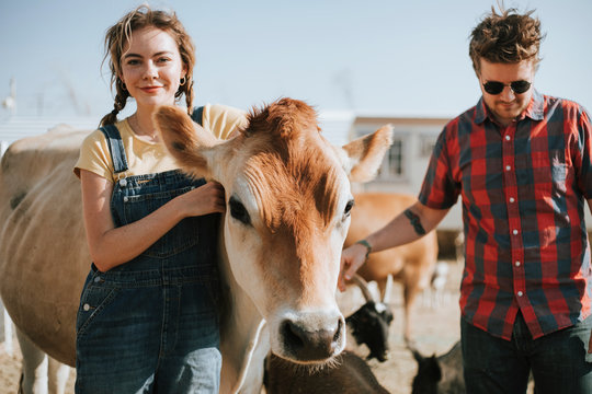 Portrait of a couple with a cow