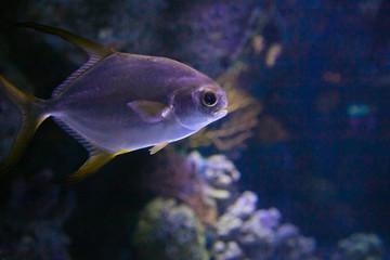 sea fish in the aquarium