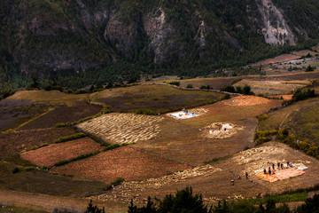 view of rice field annapurna around, Napal