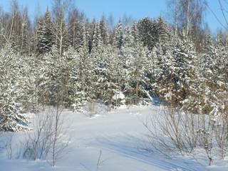 My Ural, my house
