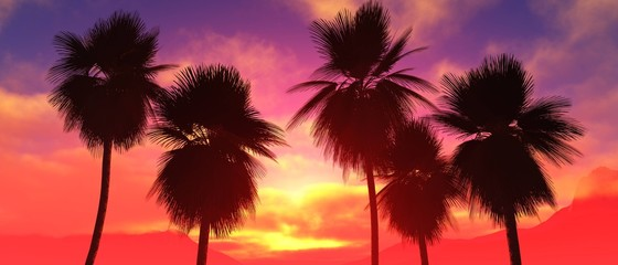 Palm trees at sunset, coconut palm trees against the sunset sky with clouds, palm trees dragging at sunrise